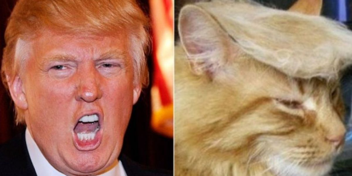 FOTOS: Gatos disfrazados de famosos