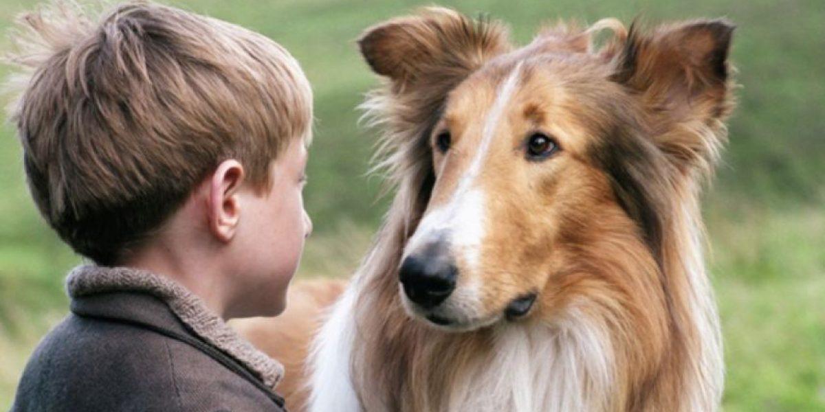 Qué pasó con Chita, Lassie y más animales de películas