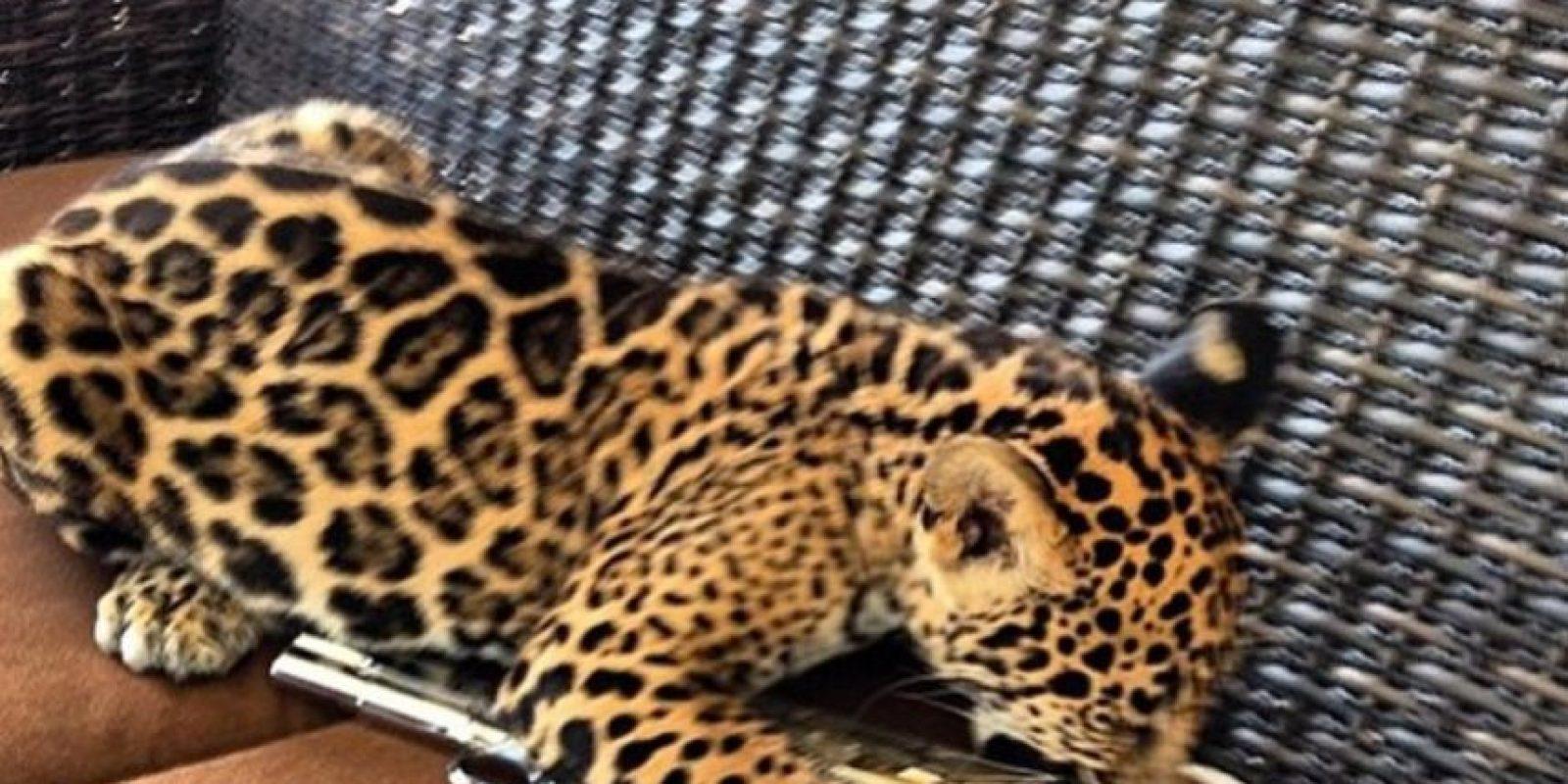 Y a diferencia de sus pares gringos, muestran armas y animales exóticos. Foto:Instagram/RKOMC