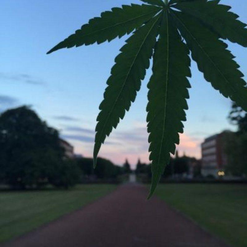 La organizoación se ha dedicado a hacer promoción de la planta en Inglaterra Foto:Facebook.com/pages/Welwyn-Garden-City-Cannabis-Club