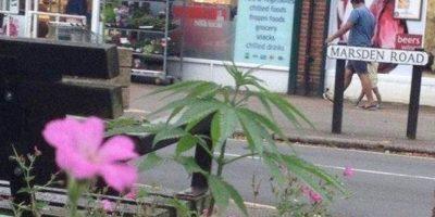 Fueron colocadas por un grupo que busca la legalización de la droga Foto:Facebook.com/pages/Welwyn-Garden-City-Cannabis-Club