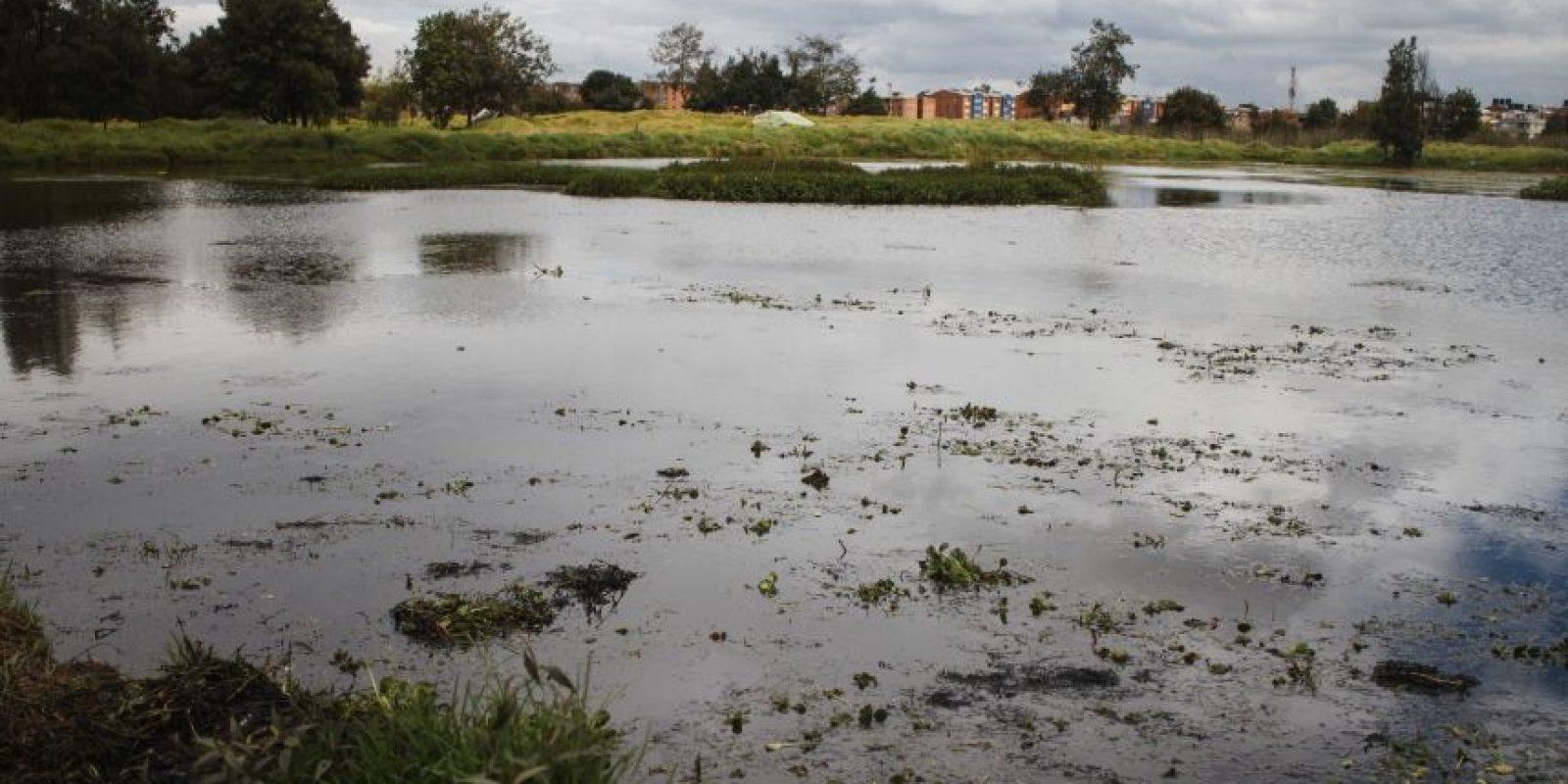 Humedal Capellanía Foto:Juan Pablo Pino / Publimetro
