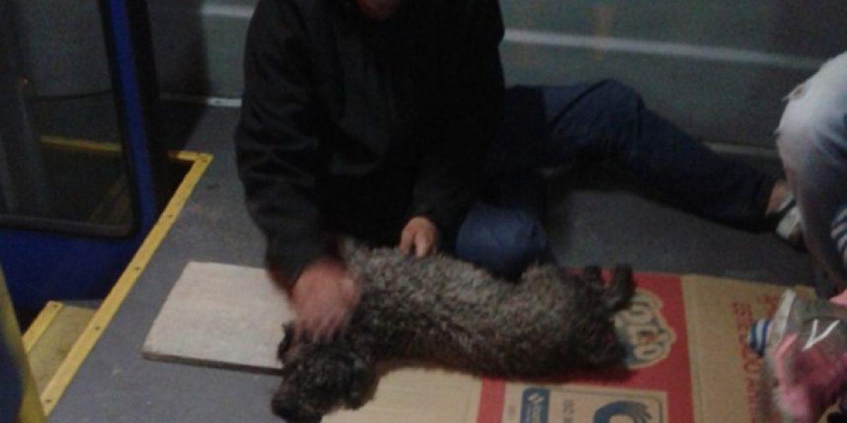 Conmovedor: Conductor de SITP le salva la vida a un perro