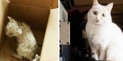 3. Antes y después Foto:Imgur