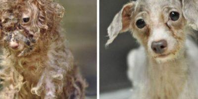 8. Antes y después Foto:Imgur