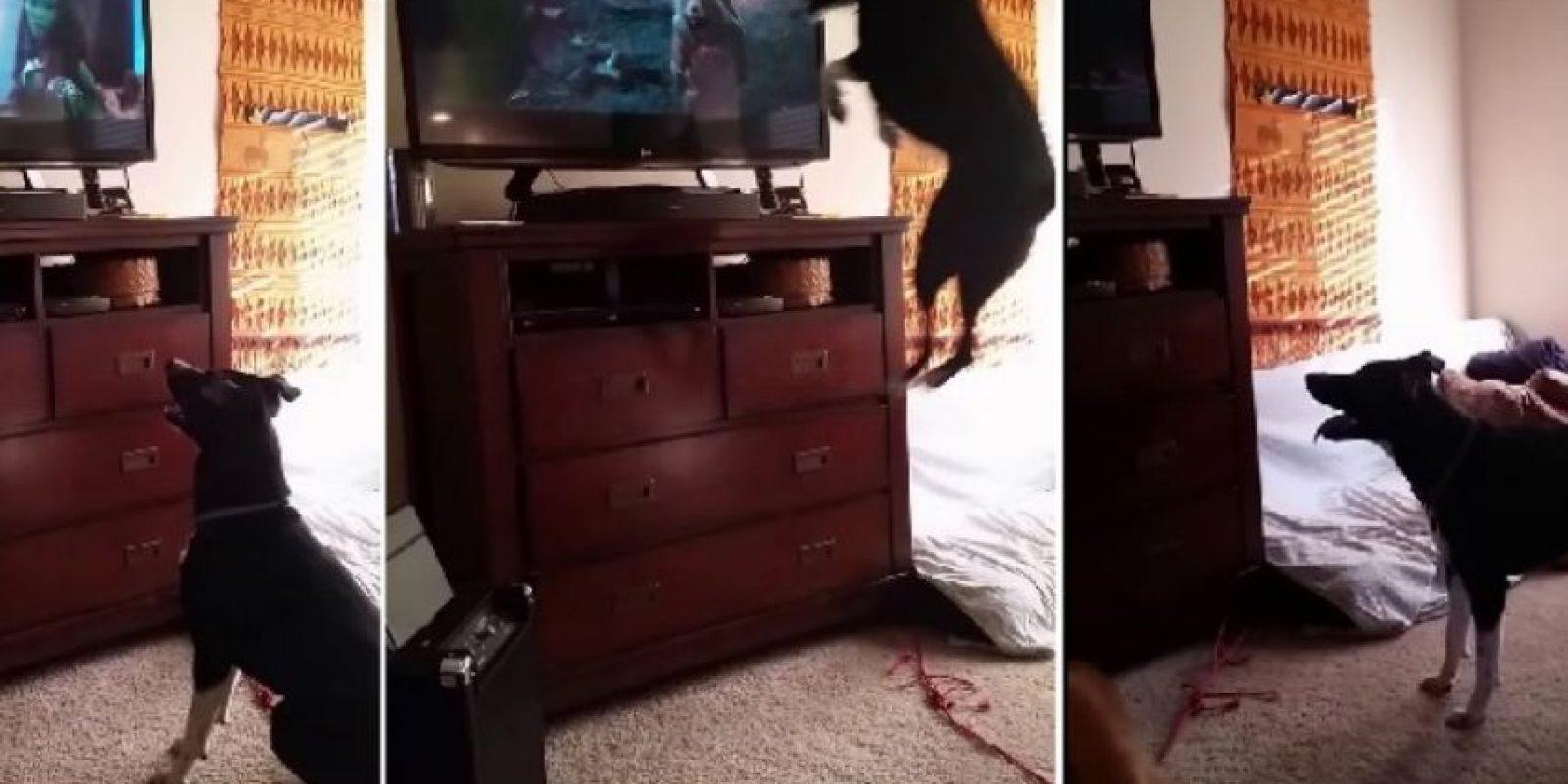 A este perro le encanta saltar Foto:Vía Youtube