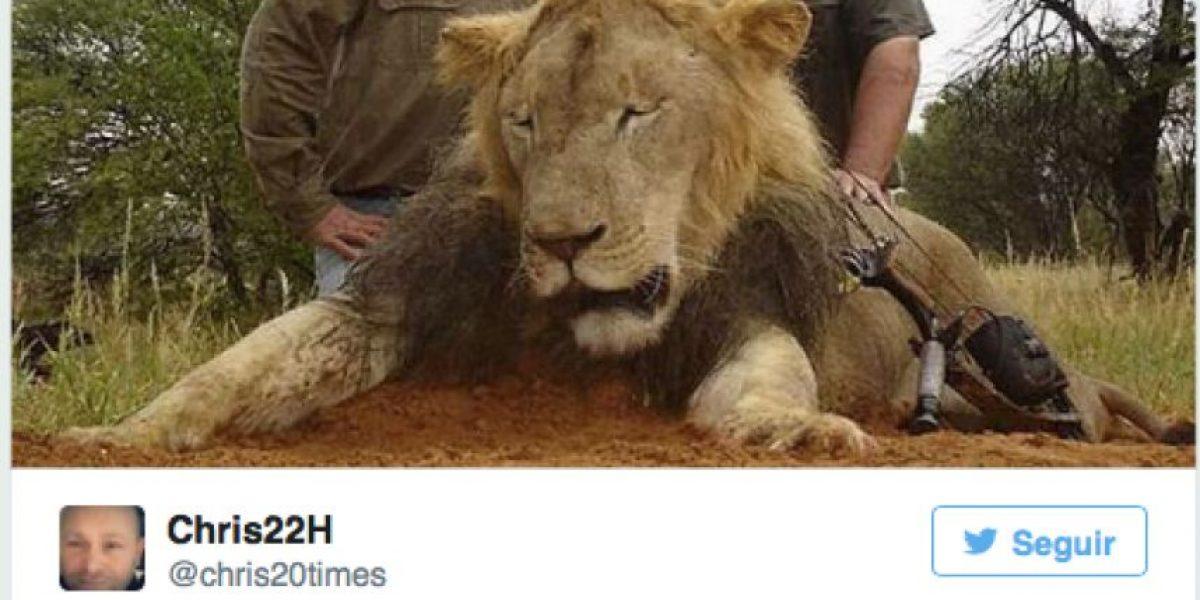 Esto es lo que dijo el cazador de uno de los leones favoritos de África