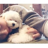 Aunque se desconoce la forma en que murió la mascoda de la cantante, Demi se limitó a decir que fue en un trágico accidente. Foto:Instagram/DemiLovato