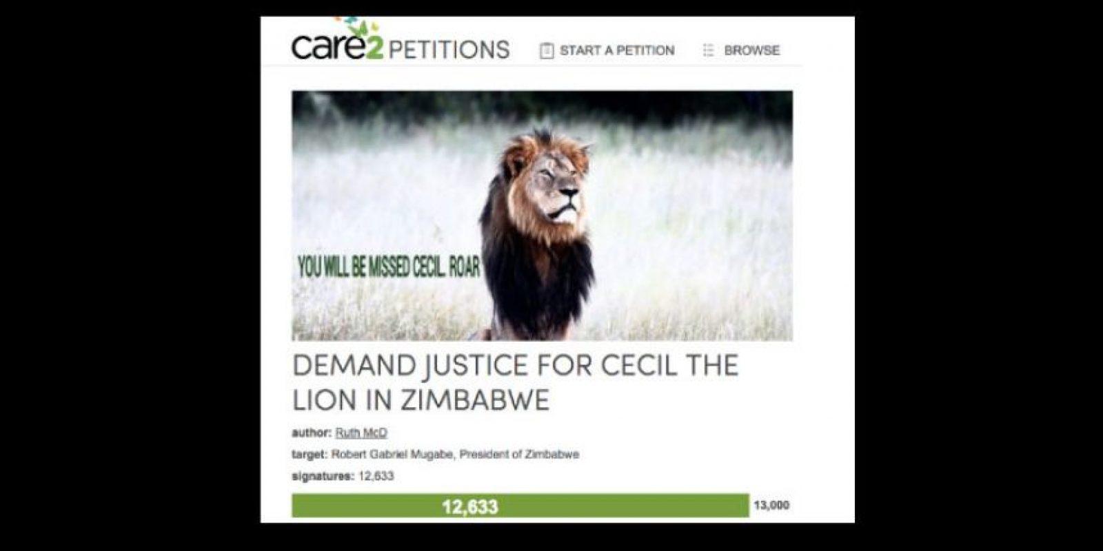 Palmer lo mató a la antigua: con arcos y flechas. Apenas se supo de su identidad, los grupos conservacionistas de Zimbawe estallaron. E Internet también. Foto:vía Care2 Petitions
