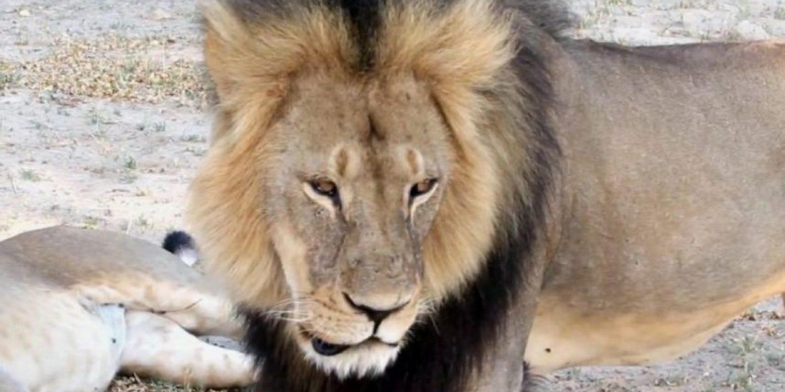 De hecho, este arruinó su vida al matar a uno de los tesoros naturales de Zimbaue. Foto:vía AP