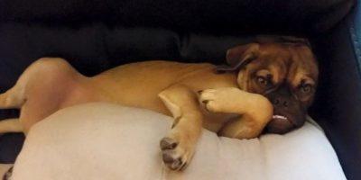 Foto:vía facebook.com/Earl-The-Grumpy-Puppy