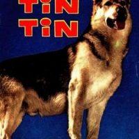 Sin embargo el animal fue obligado a realizar más de 20 películas en menos de 10 años Foto:Tumbrl