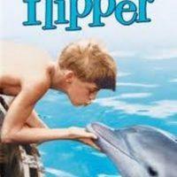 Flipper, el delfín que protagonizó la famosa serie de televisión del mismo nombre, durante varios años, realmente era una hembra sometida a pasar hambre para que hiciera lo que su entrenador, Richard O´Barry, le pedía Foto:MGM