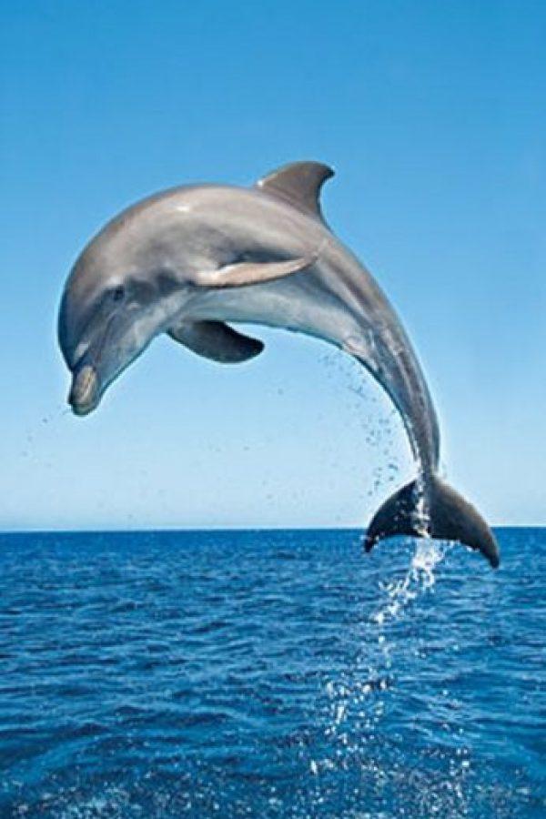 """Se dice que el delfín se suicidó y murió en los brazos del entrenador, que desde ese día se arrepintió del maltrato que daba a los animales. A partir de entonces ha luchado por la causa. Actualmente, hay un documental de nombre """"Operación Delfín"""", donde O´Barry graba la realidad que viven estos animales bajo la mano dura del hombre. Foto:MGM"""