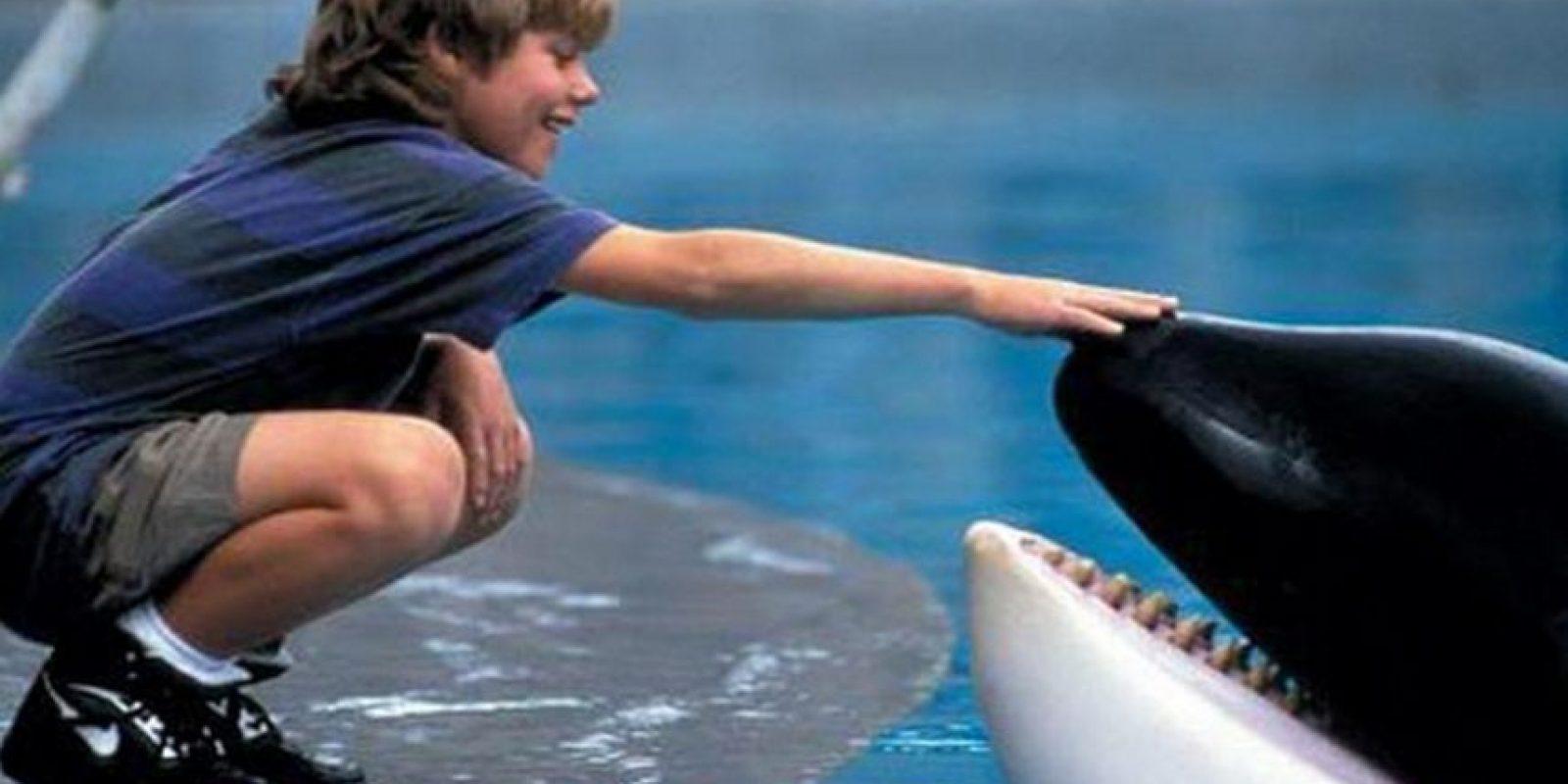 """Keiko. La ballena que estuvo varios años en un parque de diversiones de la Ciudad de México, y quien además protagonizó la cinta """"Liberen a Willy"""", fue liberada. Foto:Warner"""
