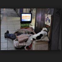 Hasta con TV Foto:Pinterest