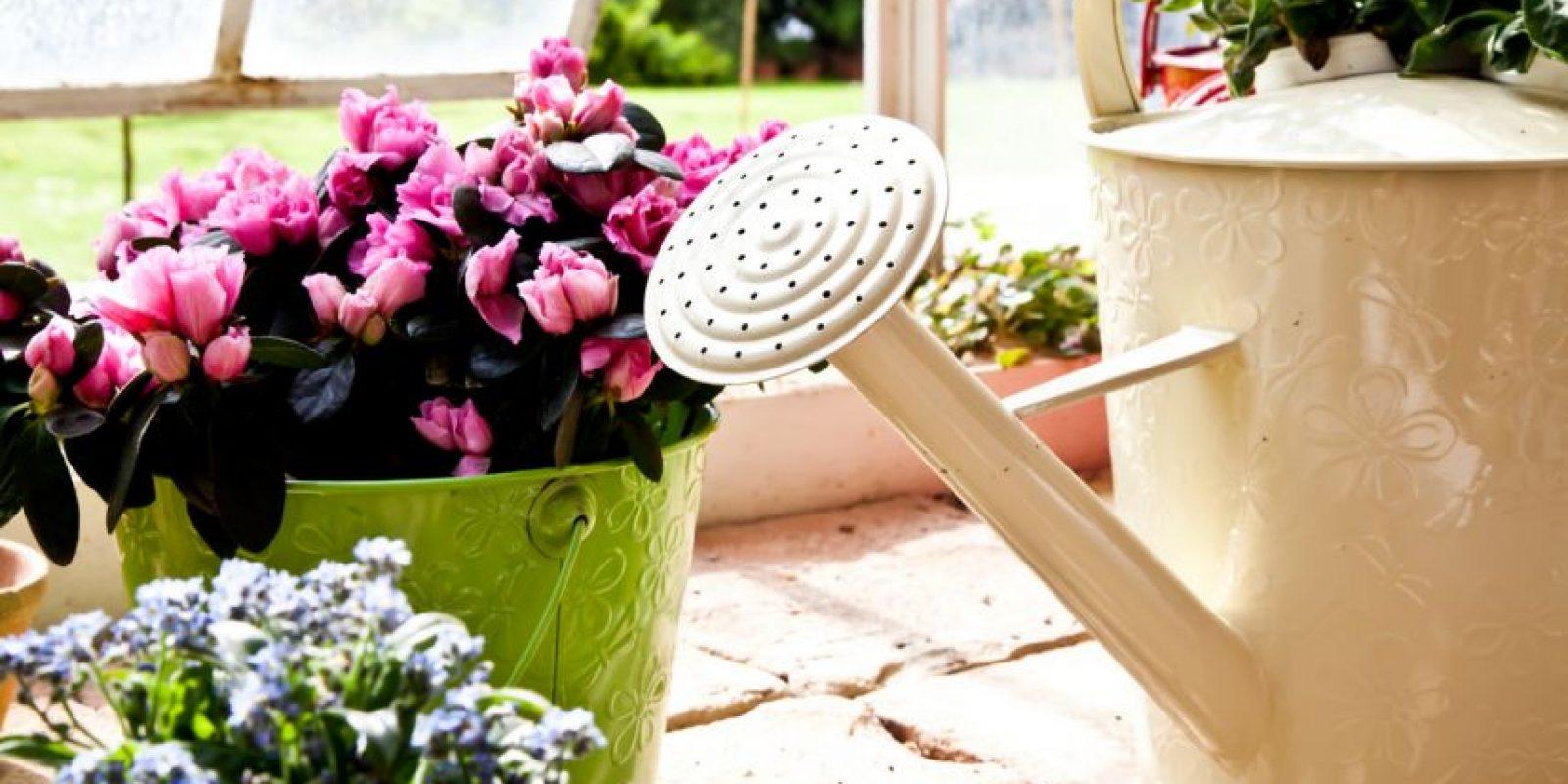 Look eco Foto:Shutterstock