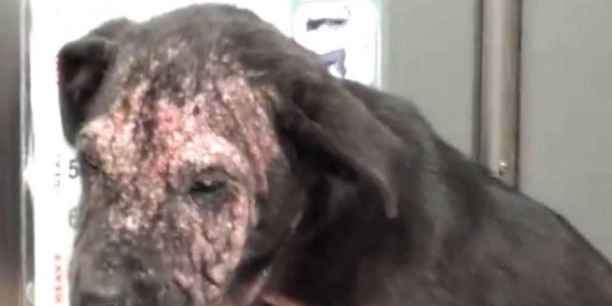 VIDEO: El rescate de este perrito los dejará con la boca abierta