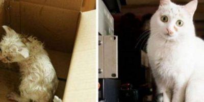 Antes y después Foto:Imgur
