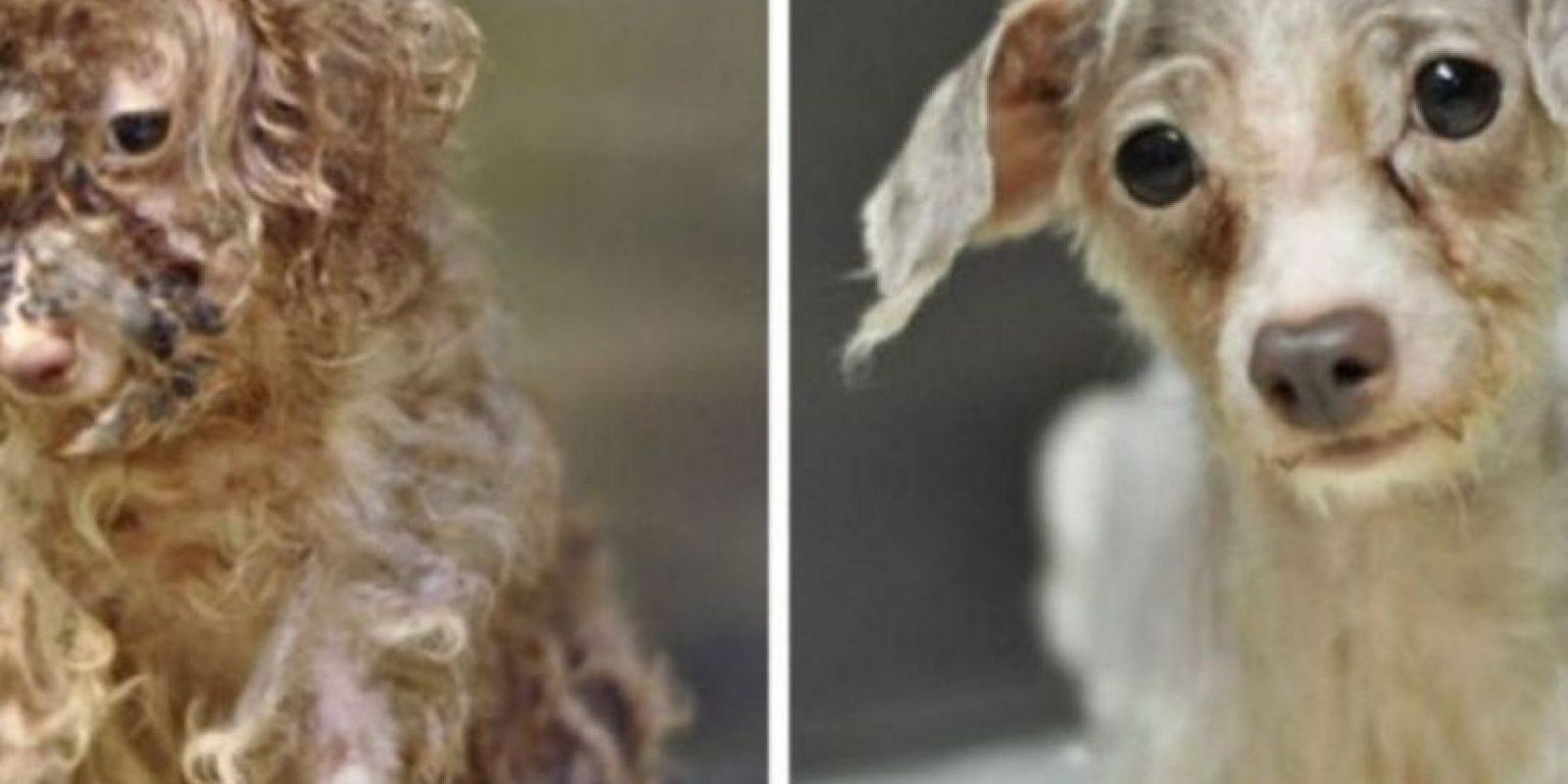 Antes y después Foto:Reddit