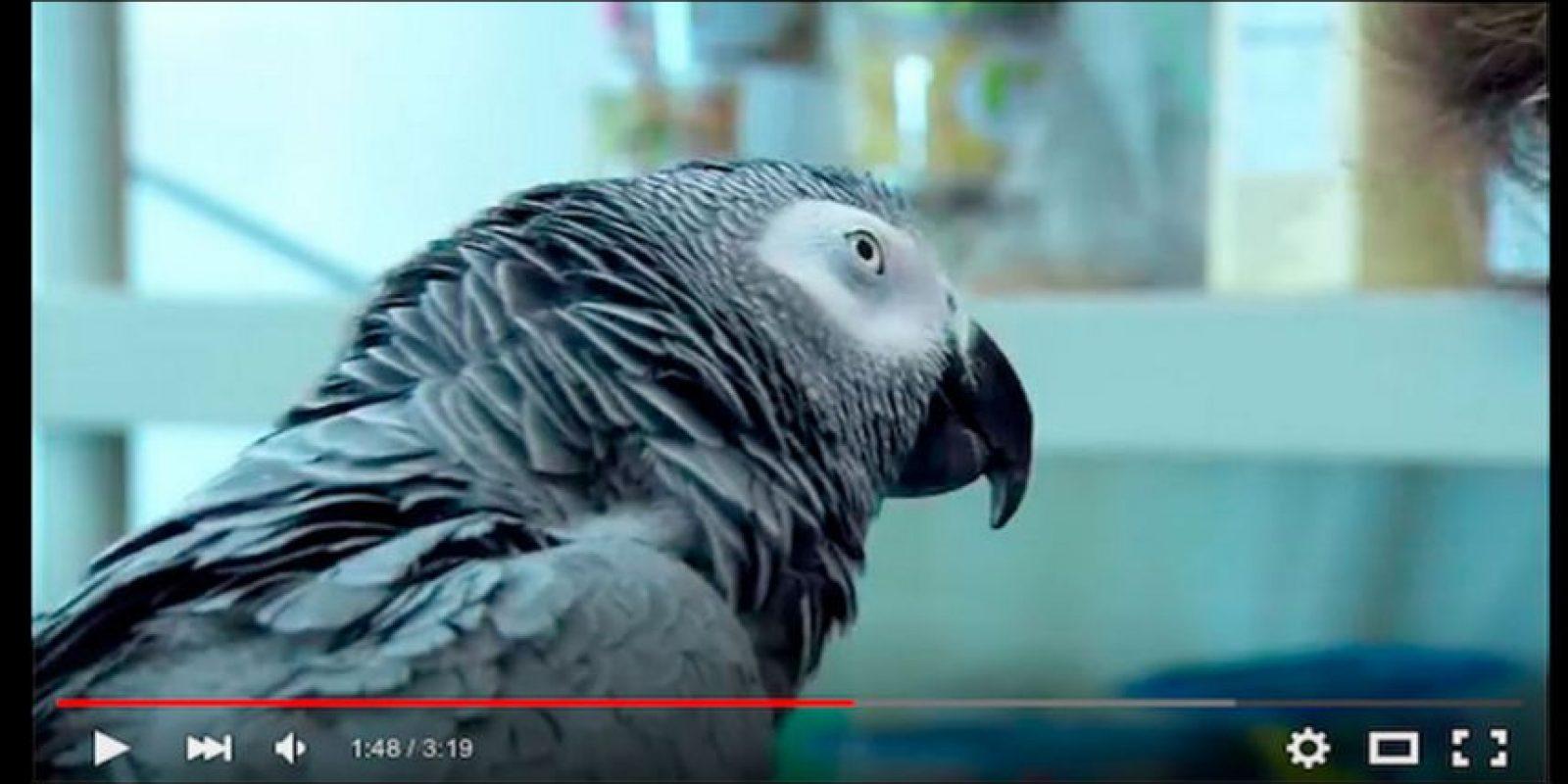 Olvídense para siempre de cortar la parte baja de un video mientras lo reproducen Foto:YouTube