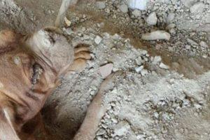 Fue amarrado para que no se escapara. Foto:Vía Facebook.com/pedro.dinis.3994