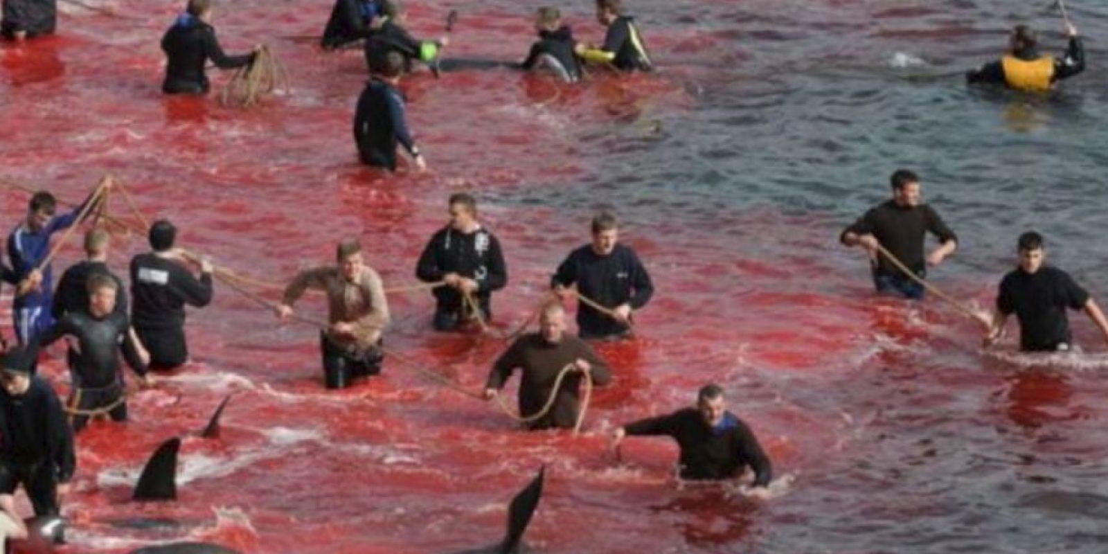 Esto lo hacen desde hace cientos de años en las Islas Feroe. Foto:vía Sea Shepherds