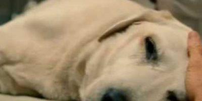 """1. Marley muere en """"Marley y yo"""". Foto:vía Fox 2000 Pictures"""