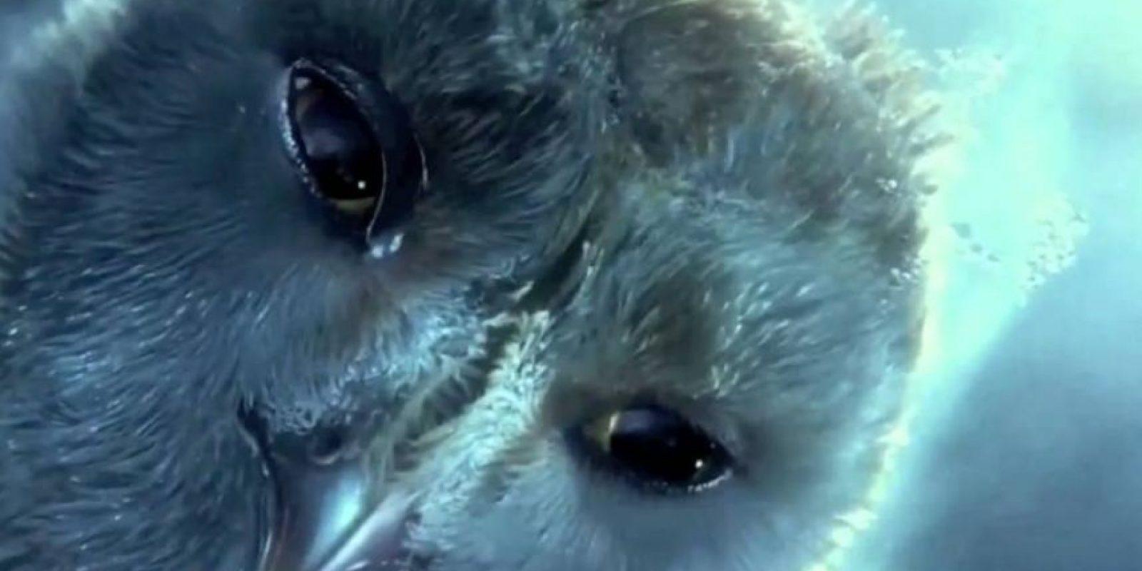 ¿Pero qué culpa tenía la pobre lechuza, Mortífagos infelices? Foto:vía Warner Bros