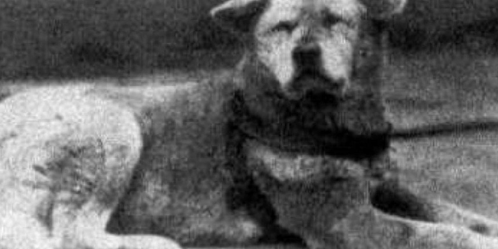 Un perro con un final triste y solitario por su lealtad. Preparen los pañuelos. Foto:vía Wikipedia