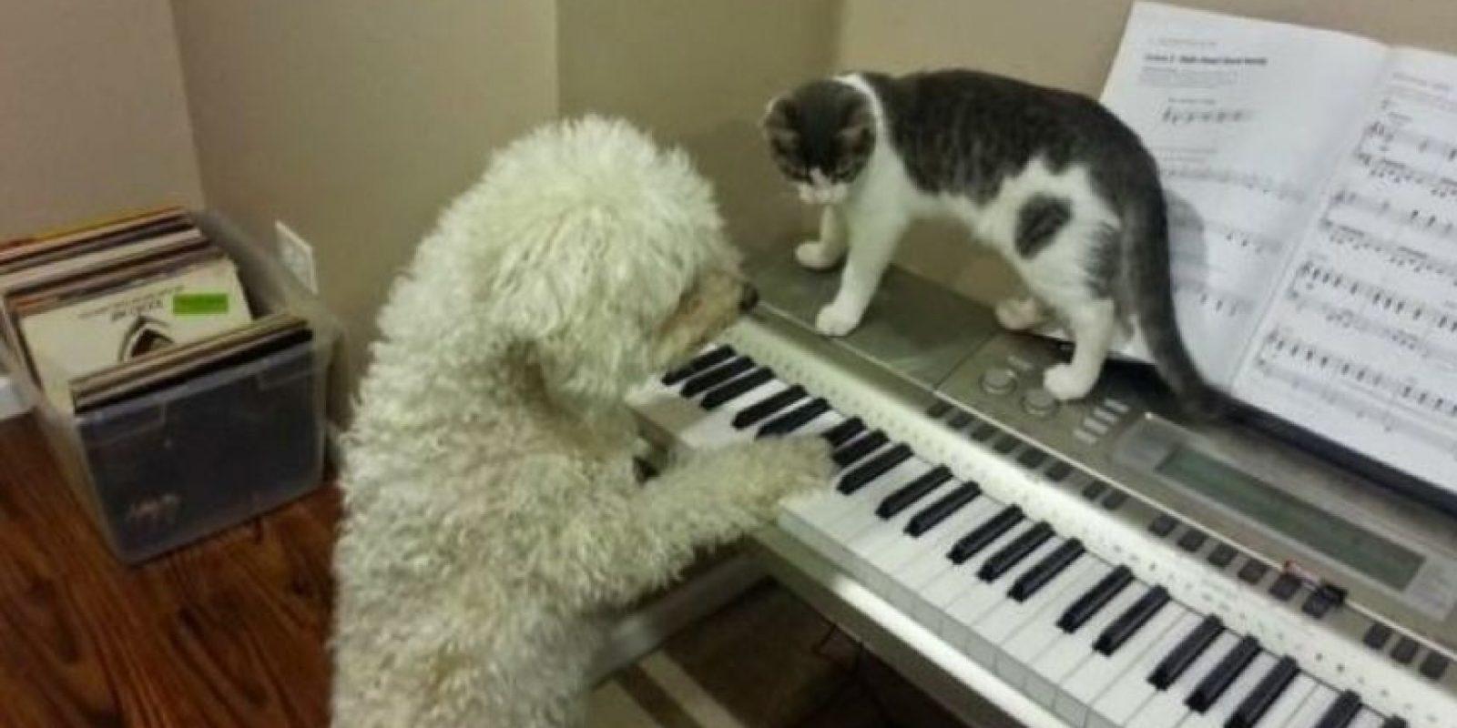 Como siempre, en el teclado Foto:Imgur