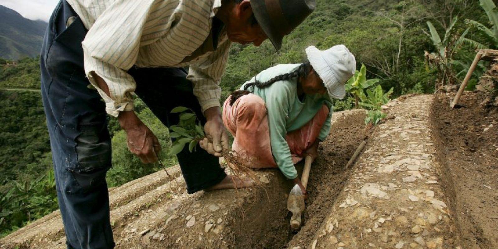 1. Trabajo en granjas orgánicas. Foto:Getty Images