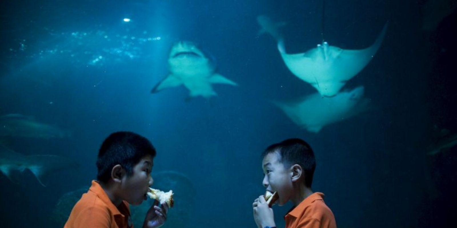 Dos niños comiendo en un acuario en China. Foto:AFP