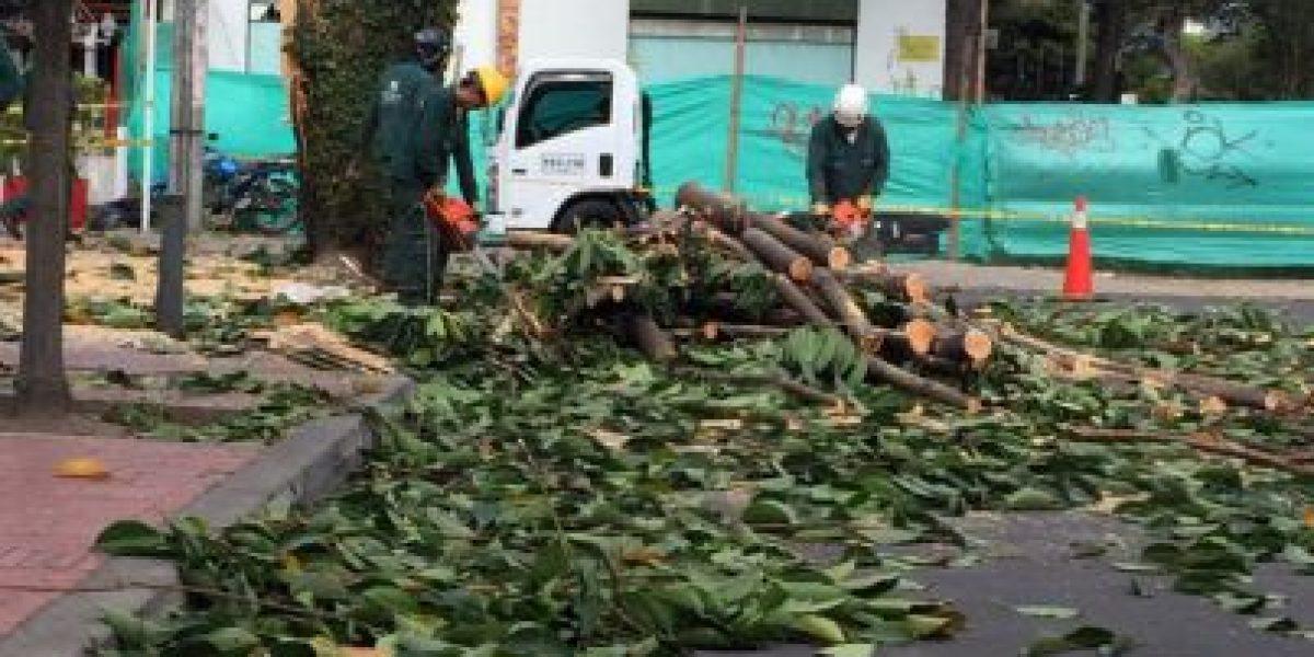 Cierres viales por tala de árboles en el sector de Quinta Camacho