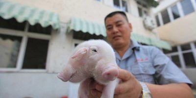 Fue encontrado fuera de un templo budista en la ciudad Xinkou en Tianjin, China. Foto:Grosby