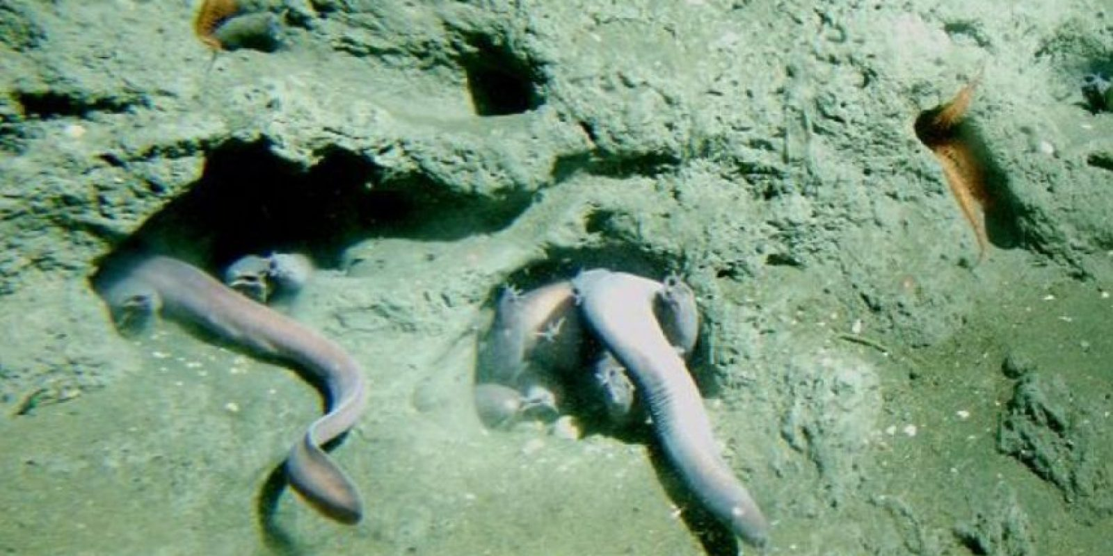 4.Pez bruja Foto:Vía Wiki