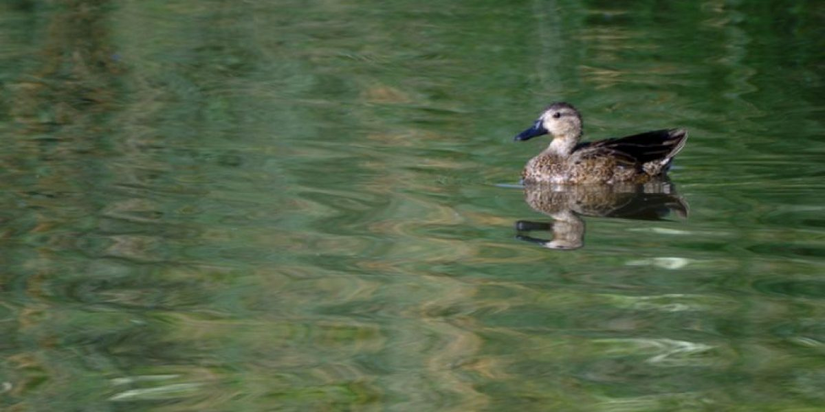 La ciencia busca salvar la biodiversidad del río Bogotá