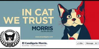 """El """"candigato"""" Morris, un felino que se postuló a alcalde Foto:Facebook.com"""