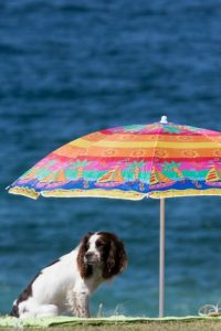 2. Molestar al perro Foto:Getty Images