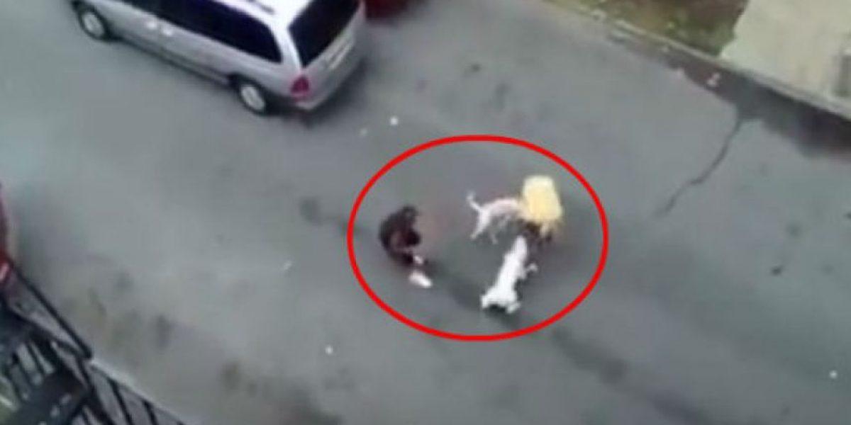 Video: Dos pitbull atacan brutalmente a hombre, vean el impactante momento