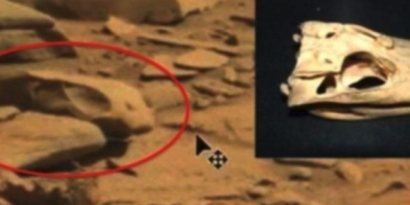 Un cráneo Foto:NASA
