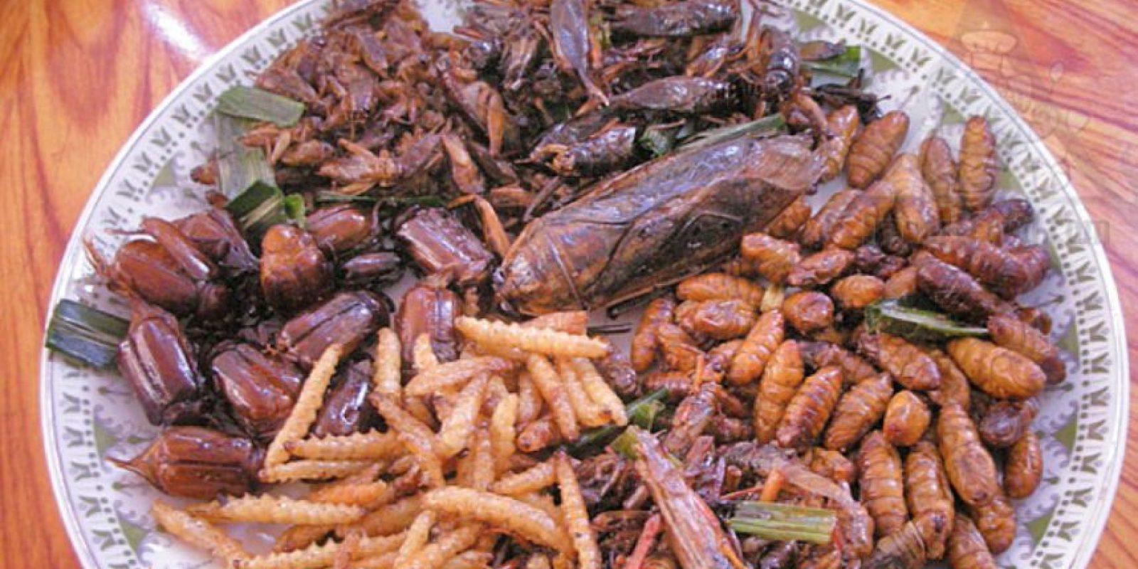 Camren Brantley-Rios se hizo famoso comiendo 30 días insectos. Foto:vía Youtube