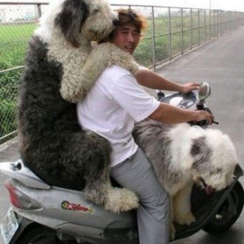 Estos dos querían ir con su amo a donde fuera. Foto:Pinterest