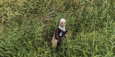 Refugiada en un campo cerca de la frontera de Hungría y Serbia. Foto:AFP