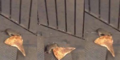 Como todo buen neoyorquino, la rata quiere su pizza. Foto:vía twitter