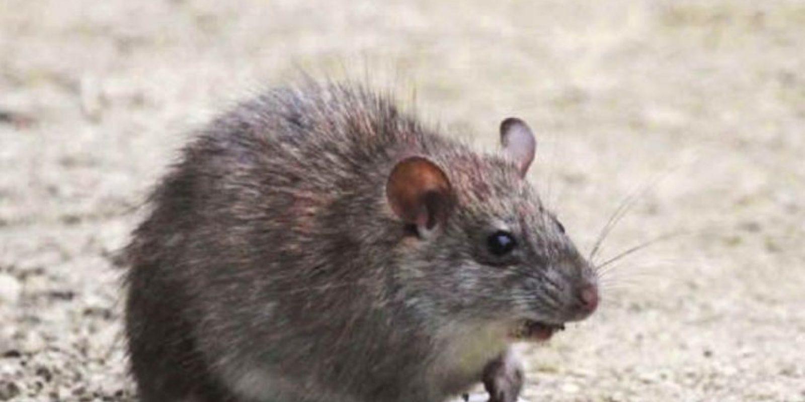 Viven en las praderas y bosques de Suramérica. Foto:vía Mammalogy.org