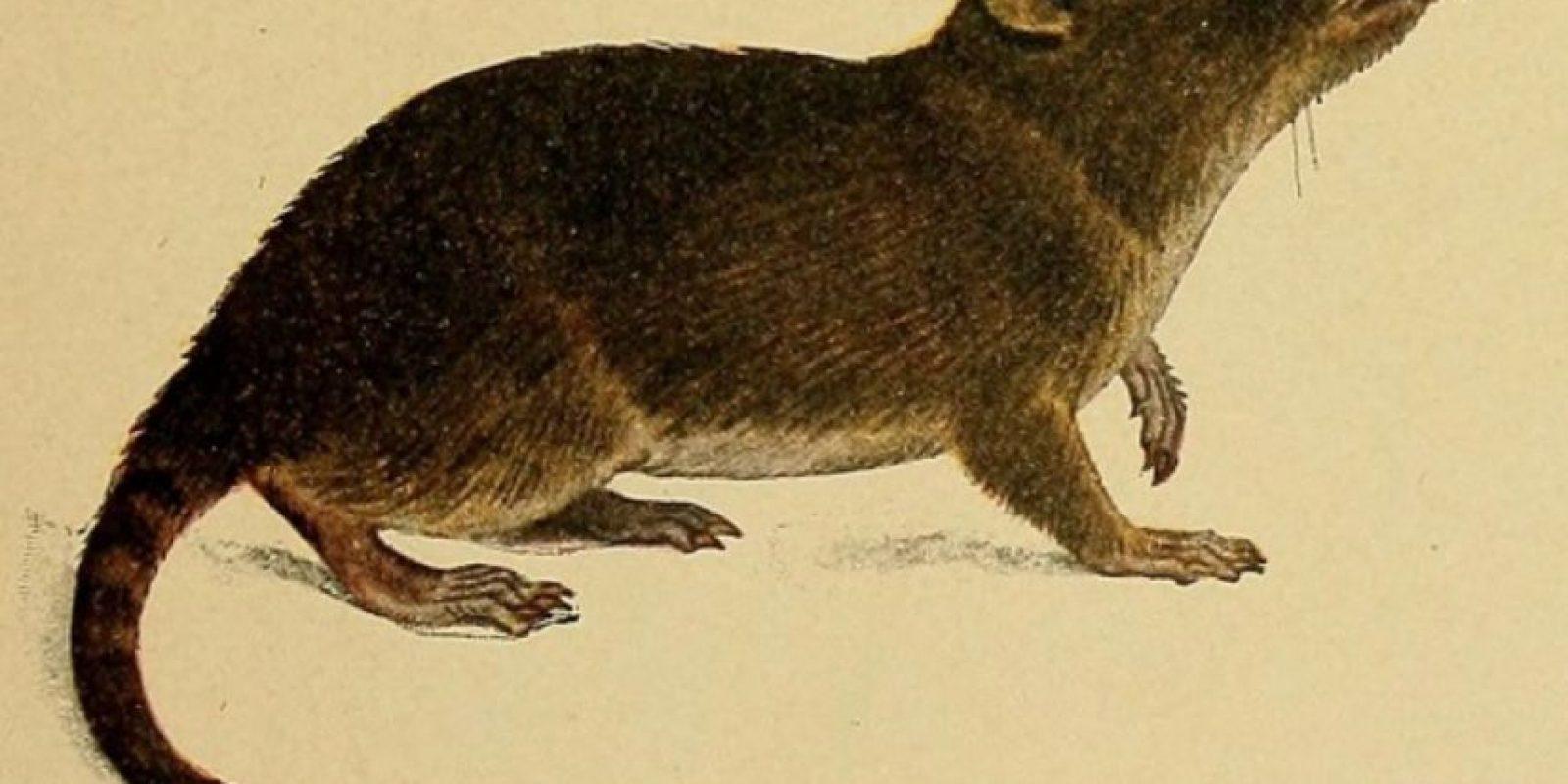 "De ahí a que se les llame ""runchos"". Foto:vía Wikipedia"