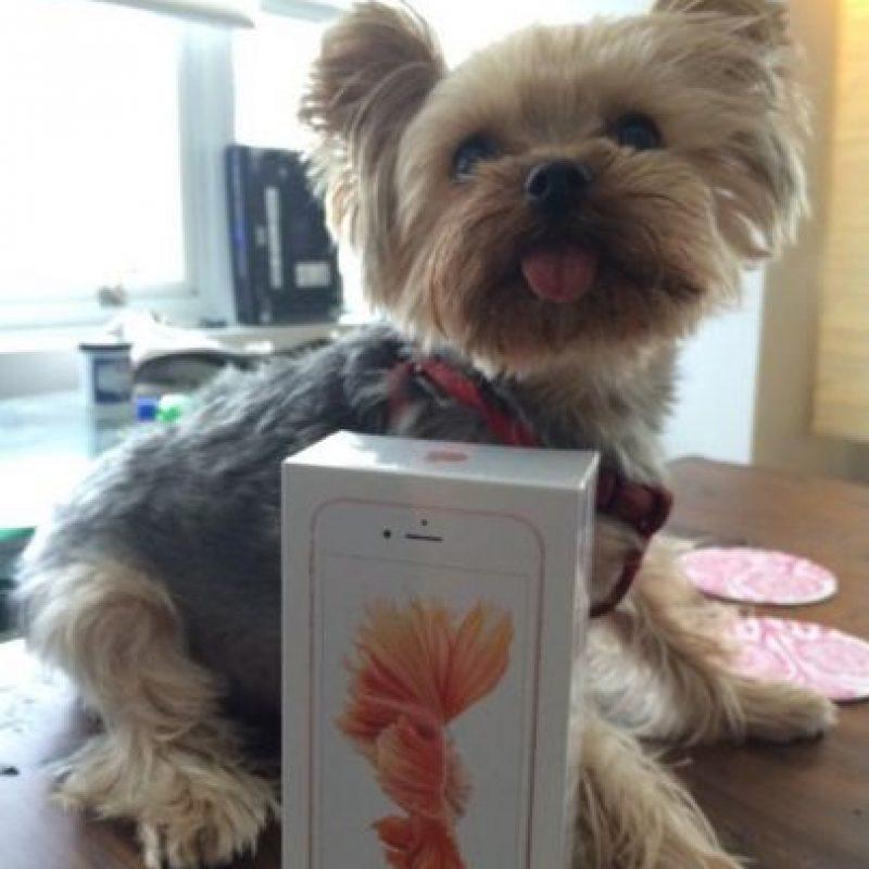 El empaque del iPhone 6s. Foto:vía twitter.com/MoonshineDesign