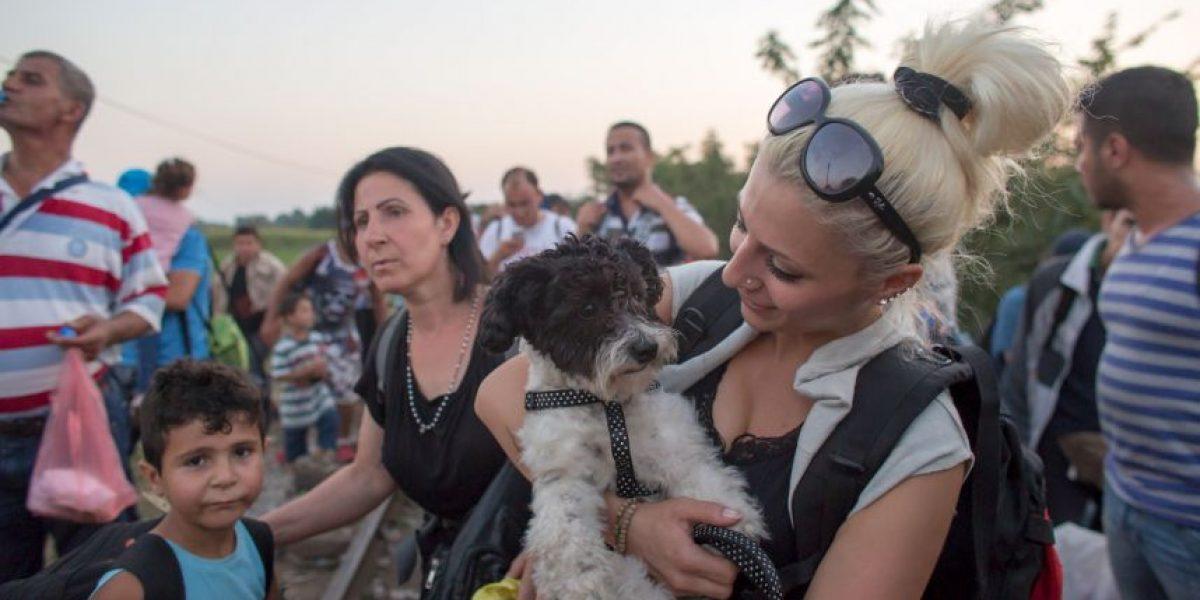 Fotos: Mascotas, los migrantes olvidados del Mar Mediterráneo