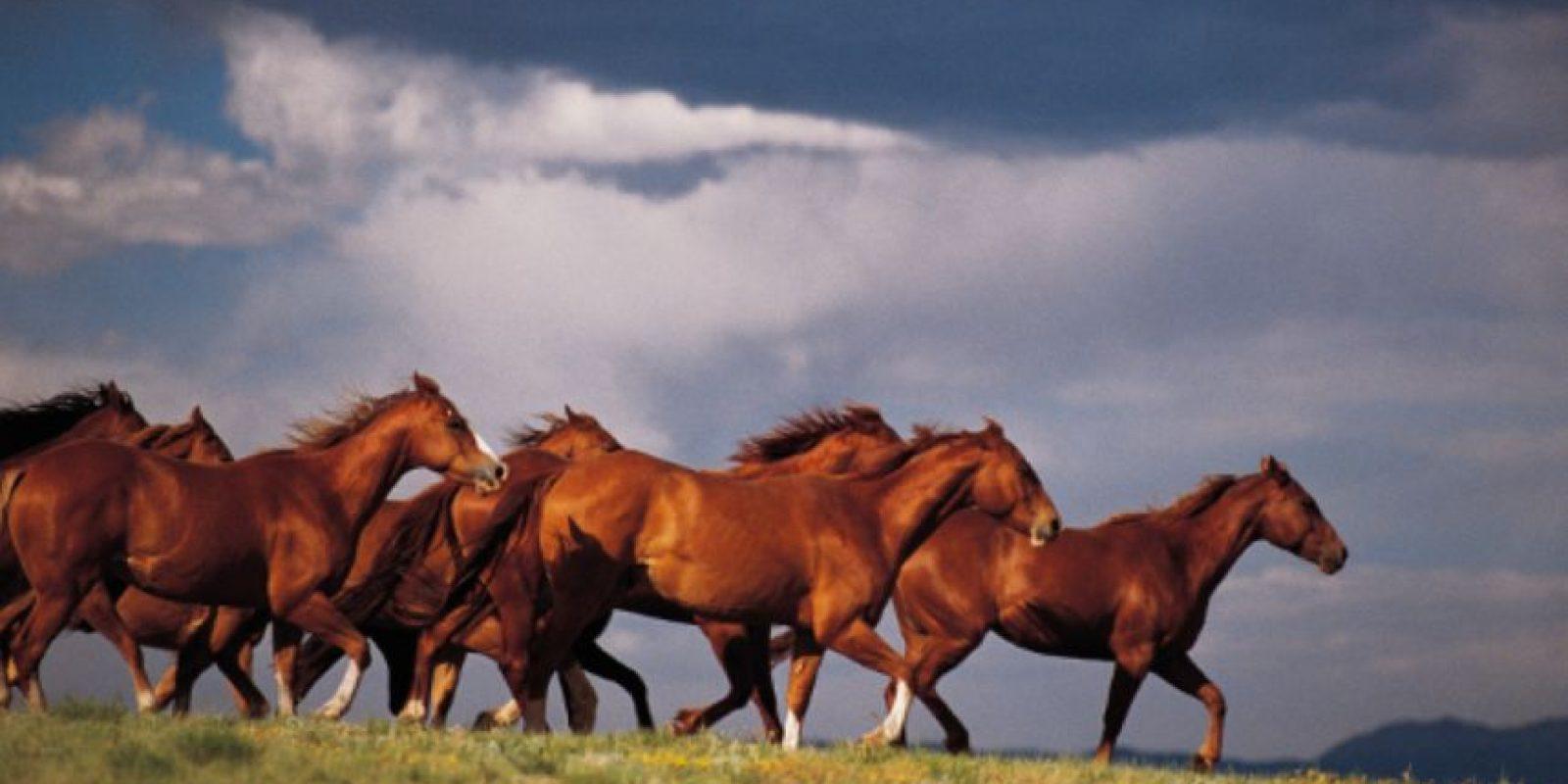 Una vez hallaron muerto a su caballo preferido. Ordenó que lo enterraran con todo y silla de montar, en la cancha de fútbol de una de sus fincas, con una silla de montar que tenía diamantes. Foto:vía Getty Images
